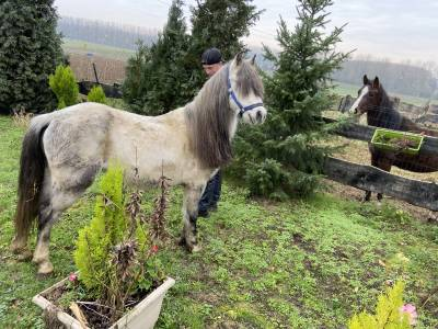 poney à vendre