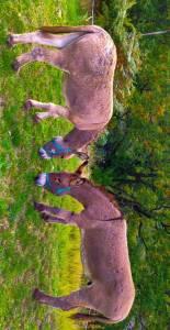 Vends ânes de Provence