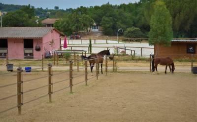 Nouveau - Pension cheval - Ecurie Proprietaires