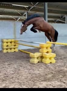 cheval de sport très prometteur pour grandes hauteurs