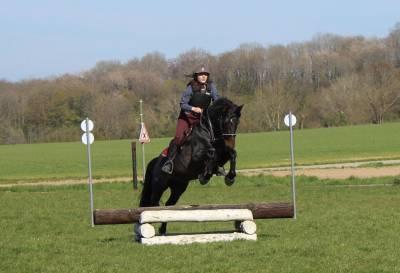 Saillie Altaïr (étalon de sport et loisir)