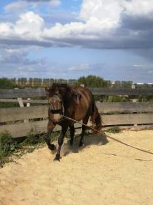 Demi-pension cheval ecurie de proprietaire expresso