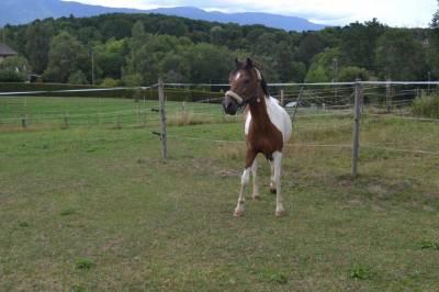 Demi-pension sur un grand poney