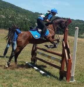 Arabo pony al limite del 2011