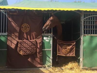 Magnifique hongre westfalen riding horse de 13 ans