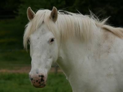 Super poney d de 13 ans