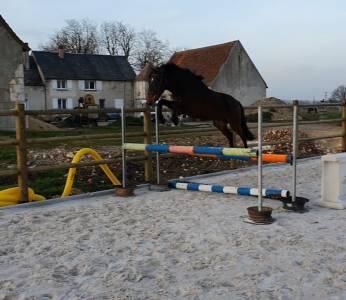 Male poney 2 ans par canto bois margot