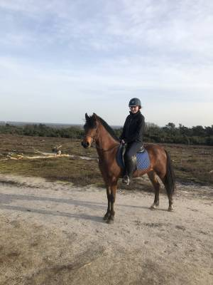 Super brave D pony