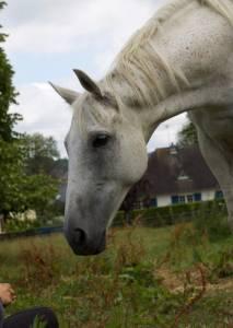 Demi pension cheval 77
