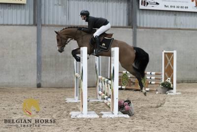 KWPN Cavallo da Sport Neerlandese In vendita 2016 Baio