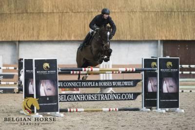 KWPN Cavallo da Sport Neerlandese In vendita 2012 Baio