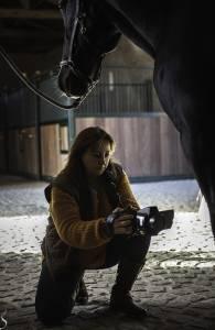 Thermographie Equine et Shiatsu équin