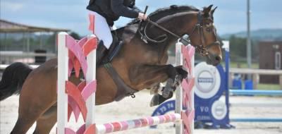 Demi pension cheval 8 ans