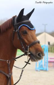 A vendre poney de sport