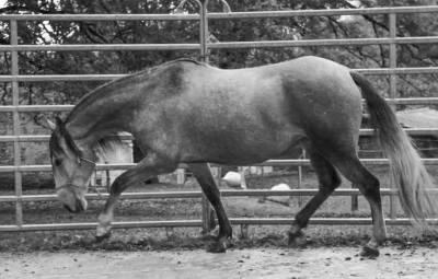 Poulains et jeunes chevaux