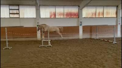 Pony in vendita