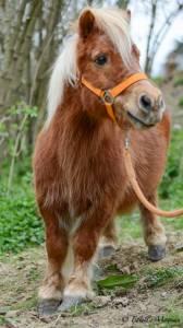 Mini camp à poney