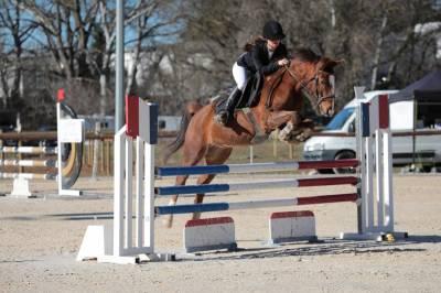 Excellent poney de sport