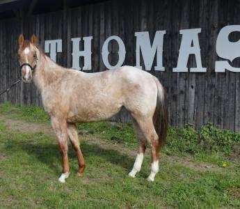 Pretty last - paint horse 2019 (f)