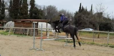 Poney d 4 ans par don juan
