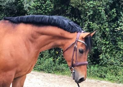 Pony salto