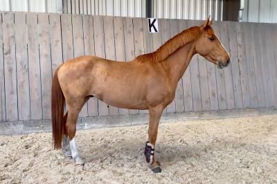 Splendide poney d de sport pfs - 6 ans