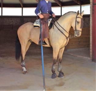 Gentil cheval polyvalent pour tout type de cavalier