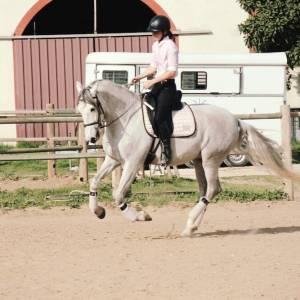 Jeune magnifique cheval