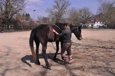 Introduction à l'équitation éthologique