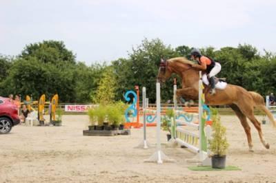 élevage chevaux cso  vends cause surnombre hongre 13ans