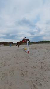 Hongaars sportpaard Te koop 2013 Vos ,  Dalton des malais