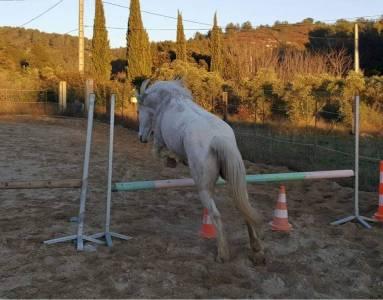 Demi pension poney c