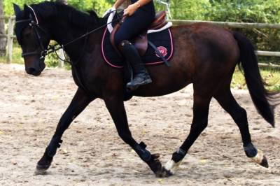 Poney sport et loisir