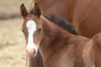 à reserver poulain quarter horse whizgun enterprise