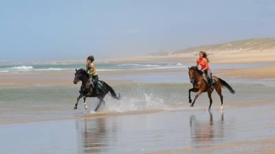 Monitor de equitación - Contrato temporal Tiempo completo - Landas Francia