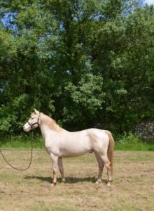 Magnifique poney d 6ans