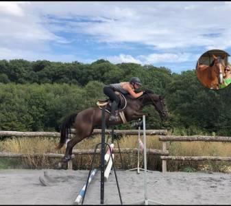 Top poney de sport