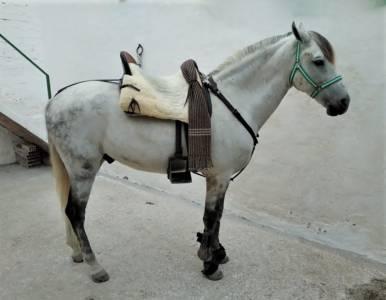 Très bon cheval pour le dressage et l'extérieur.