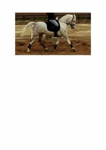 Pony D Especializado en DOMA