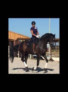 Très beau cheval noir de dressage 10 ans
