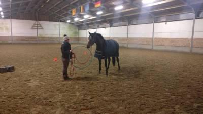 Séance d'équitation éthologique