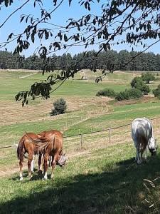 vacances avec votre cheval ou juste soirée étape