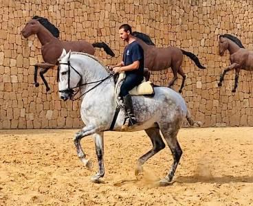 Vigor -super gentil cheval valide pour débutants