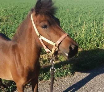 Scambi o vend pony