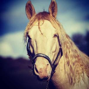 New wimpy cat  : etalon quarter horse