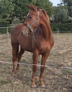 Cheval 4 ans