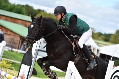 Cheval de sport hongrois de 5 ans