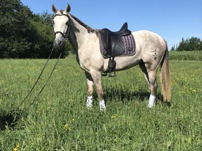 Cheval azteque 4 ans