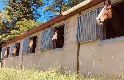 Écurie de moncley / JDB sport horses