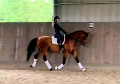 Magnifique cheval excellent niveau dressage tous niveau